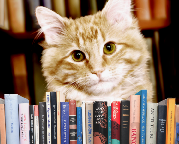 dewey the library cat book summary essay The book tells the narrative of dewey readmore books a cat who found its manner into a library book bead box one cold winter forenoon vicki myron the librarian found a hoar bitten and stop deading kitties and saved him.