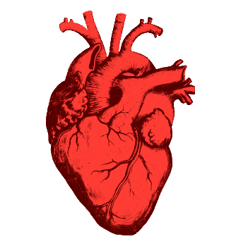 Why Is the Heart Symbol so Anatomically Incorrect?